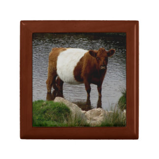 Dartmoor Belted Galloway Cow Standing River Small Square Gift Box