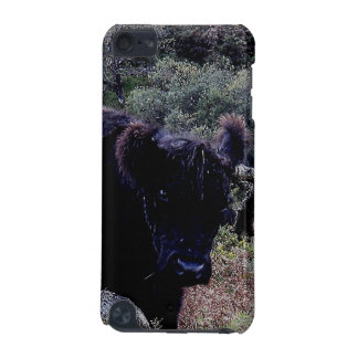 Dartmoor Black Galloway Cow Scratching On Tree iPod Touch 5G Covers