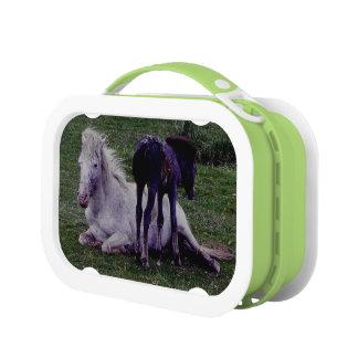 Dartmoor  Grey Pony Mare Resting Foal Standing Lunchboxes