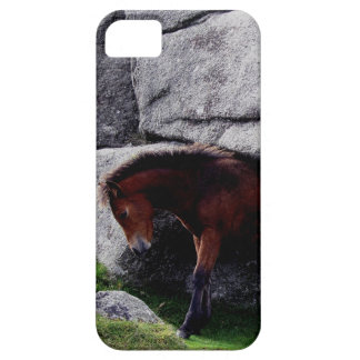 Dartmoor Pony Foal Itching Bone Hill Rocks iPhone 5 Cases