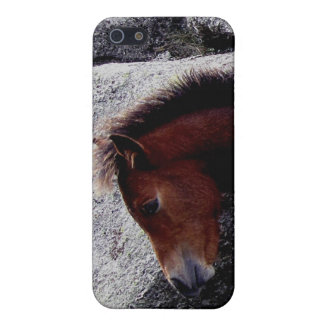 Dartmoor Pony foal Itching On Bone Hill Rocks iPhone 5 Covers