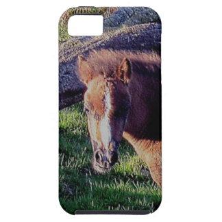 Dartmoor Pony Foal Near Fallen Tree Summer . 2 iPhone 5 Cover