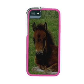Dartmoor Pony Foal Resting Summer iPhone 5 Case
