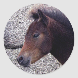 Dartmoor Pony Foal Sheltering Bone Hil Rocks Round Sticker