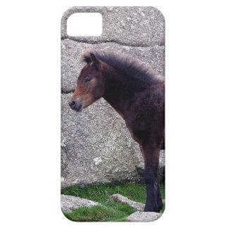 Dartmoor Pony Foal Standing At Bone Hill Rocks iPhone 5 Cases