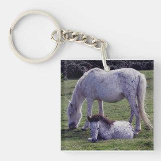Dartmoor Pony Grey Mare Grazeing Foal Resting Key Chains
