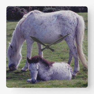 Dartmoor Pony Grey Mare Grazing Foal Resting Wall Clock