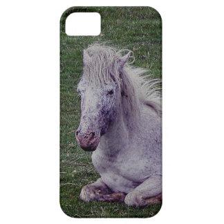 Dartmoor Pony Grey Mare Resting iPhone 5 Covers