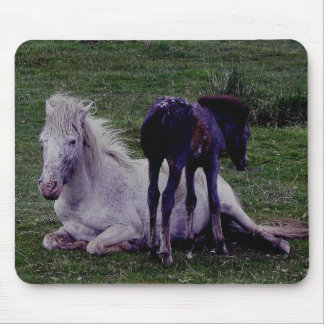 Dartmoor Pony Grey Mare Resting Foal Standing Mouse Pad