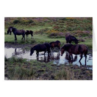 Dartmoor Pony Herd At Watering Hole Greeting Card