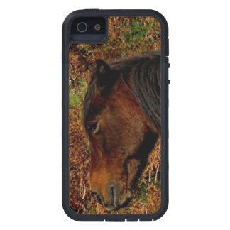 Dartmoor Pony Itching iPhone 5 Covers
