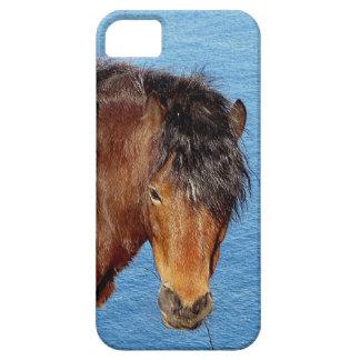 Dartmoor Pony Standing Near Blue Sea iPhone 5 Cover
