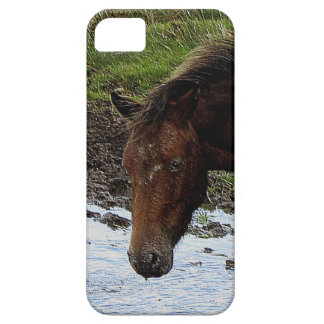 Dartmoor Pony Standing Watering Hole Case For The iPhone 5
