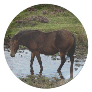 Dartmoor Pony Standing Watering Hole Party Plates
