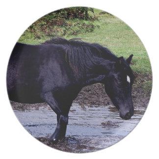 Dartmoor Pony Wadeing In Watering Hole Dinner Plate