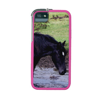 Dartmoor Pony Wading In Watering Hole Cover For iPhone 5