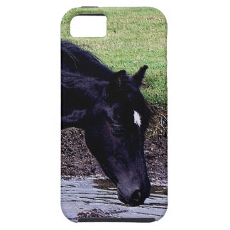 Dartmoor Pony Wading In Watering Hole iPhone 5 Cover