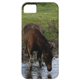 Dartmoor Pony Yearling At Watering Hole Case For The iPhone 5