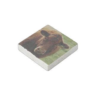 Dartmoor South Devon Cow Looking Stone Magnet