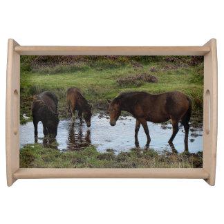 Dartmoor Three Dartmoor Ponies At Watering Hole Serving Platter