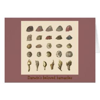 Darwin's beloved barnacles card