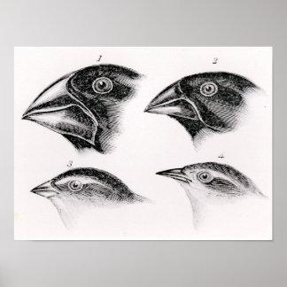 Darwin's bird observations poster