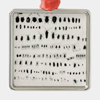 Darwin's insect collection christmas ornaments