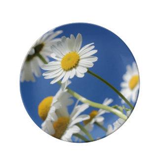 Dasy Flower Porcelain Plate