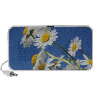 Dasy Flower Travelling Speakers