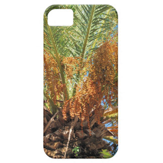 Date palm iPhone 5 cases