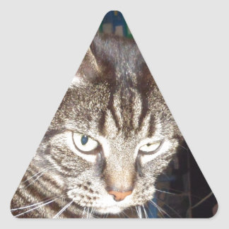 Dave's Watching You Triangle Sticker