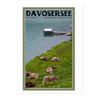 Davos - Cows Along the Lakefront Postcard