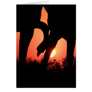 Dawn Touch Wild Horse Greeting Card