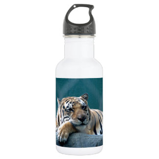Day Dreaming 532 Ml Water Bottle