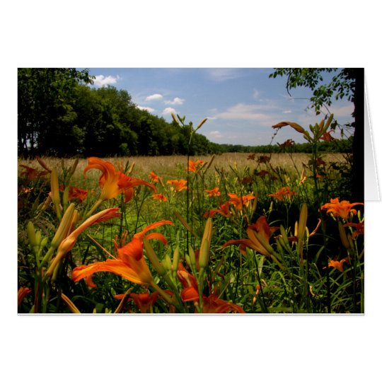 Day-Lilies Along A Field Of Tall Grasses Card