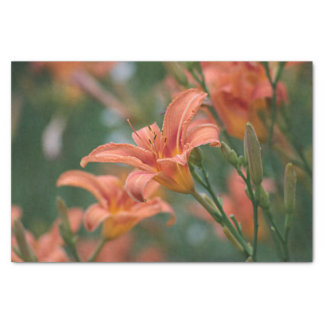 Day Lilies Tissue Paper
