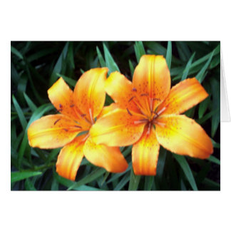Day Lillies Card