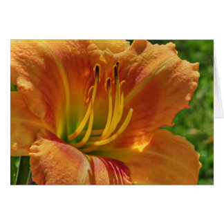 Day Lily No. 1 Card