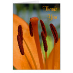 day lily thank you note card
