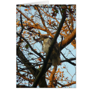 Day of the Hawk Greeting Card