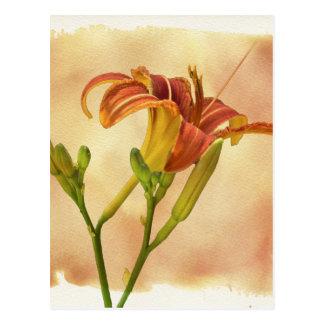 Daylilies - Hemerocallis Postcard