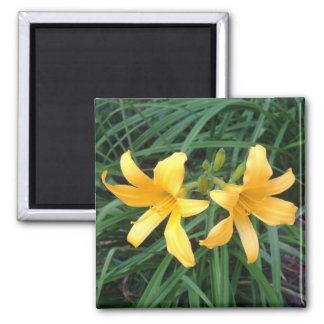 "DAYLILY ""Downey"" Gold Duo --- Magnet"