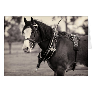 Days Gone By - Clydesdale Horse Card