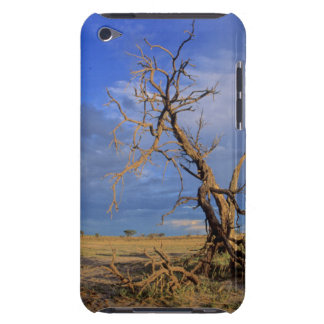 Dead Camel Thorn (Acacia Erioloba) Tree iPod Touch Cover