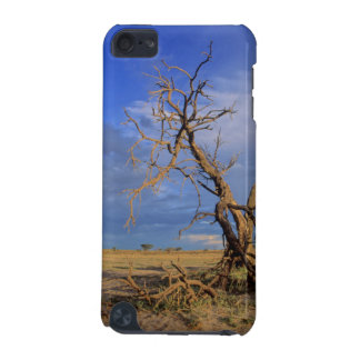 Dead Camel Thorn (Acacia Erioloba) Tree iPod Touch (5th Generation) Covers