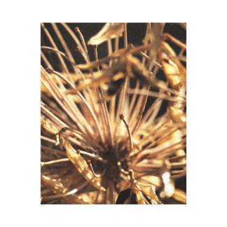 Dead Dandelion Canvas Gallery Wrapped Canvas