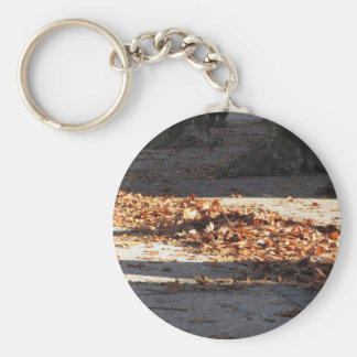 Dead leaves lying on the ground in the fall key ring