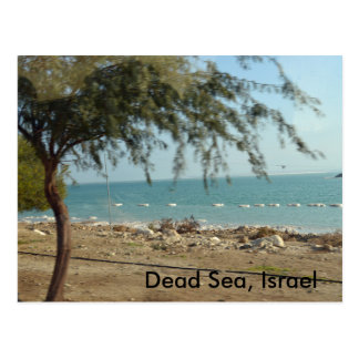 Dead Sea, Israel Postcard