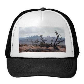 Dead tree, Arches National Park, Utah, U.S.A. Mesh Hats