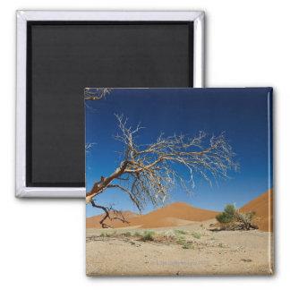 dead tree at dune 45 in desert Landscape of Magnet